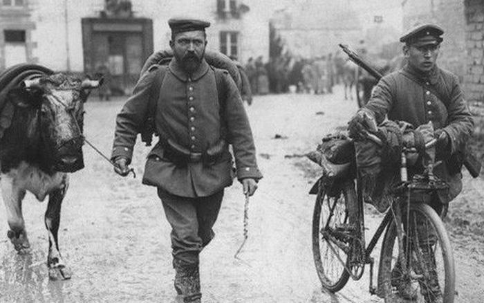 Cuộc đối đầu giữa một viên tướng Đức và một con bò già